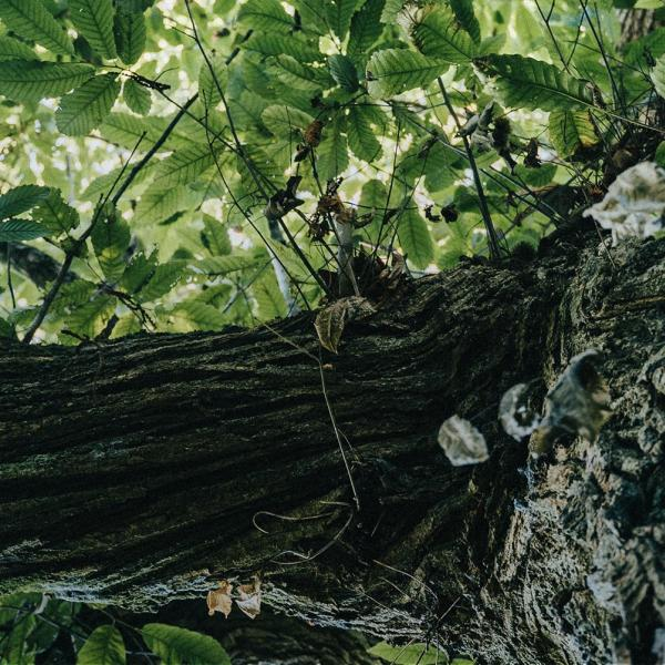 Des arbres qui rapportent de l'argent