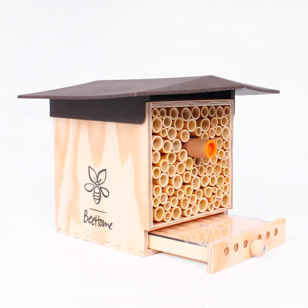BeeHome Observer : adopter des abeilles sauvages