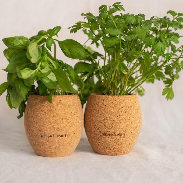 Duo d'herbes aromatiques en pot