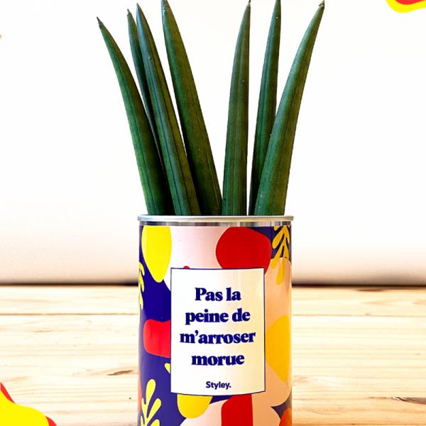 Pas La Peine De M'arroser Morue - Plante